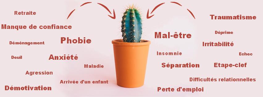 banniere_line_cactus